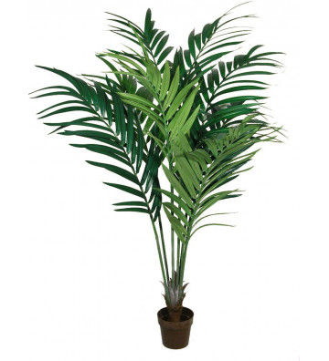 Kentia verde simile alle foglie di palma concoral. Dimensioni: h210cm