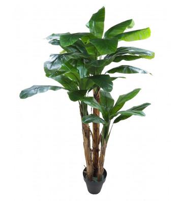 Banano artificiale verde realistico alta qualità concoral. Dimensioni: h300cm